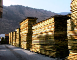 Natural maturing of Timber